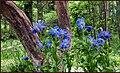 Attadale Gardens, Strath Carron. - panoramio (1).jpg