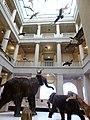 Ausstellung Klimagewalten Landesmuseum.JPG