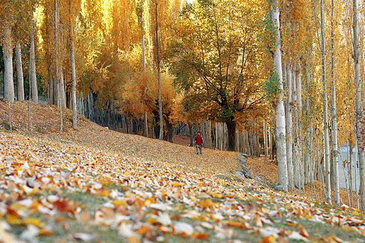 Autumn at nagar valley , paksitan