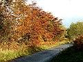 Autumn glory on the B840 at Loch Awe, Argyll - geograph.org.uk - 72348.jpg