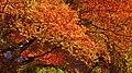 Autumn orange - panoramio (11).jpg