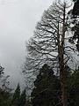 Awsome tree.jpg