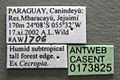 Azteca alfari casent0173825 label 1.jpg