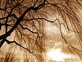 Bare Tree 2.jpg