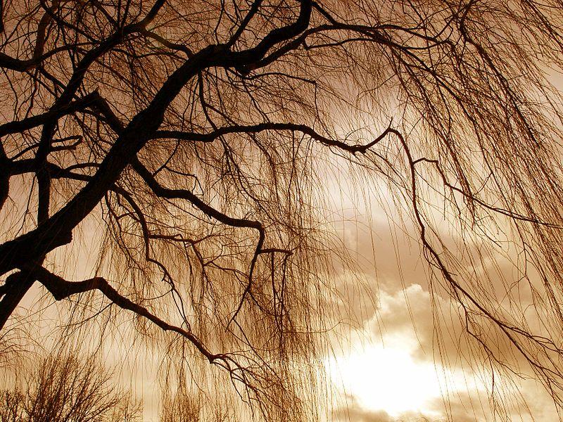 File:Bare Tree 2.jpg