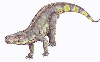 Rauisuchia order of reptiles