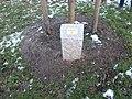 Baumspende im Alsterpark (2).jpg
