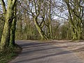 Beaconhill Beeches, Beacon Hill Lane - geograph.org.uk - 391540.jpg