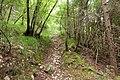 Belluno trail.jpg