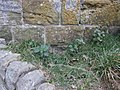 Bench mark below the entrance to Scarborough Castle - geograph.org.uk - 1524732.jpg