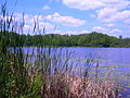 Benton Lake Manistee Forest.JPG
