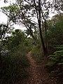 Berowra Track - panoramio.jpg