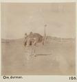 Bild från familjen von Hallwyls resa genom Egypten och Sudan, 5 november 1900 – 29 mars 1901 - Hallwylska museet - 91689.tif