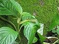 Bio-Diversity in Western Ghats.jpg
