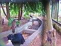 Bioniverzoo, Chetumal, Q. Roo - panoramio.jpg