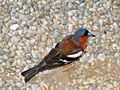 Bird at Lake Como 1.jpg