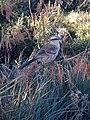 Bird in Serra da Canastra.jpg