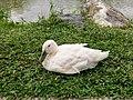 Birda001.jpg