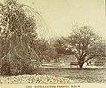 Birds of the Boston Public Garden - a study in migration (1909) (14728073856).jpg