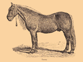 Bitjug-Pferd 2.png