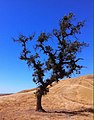 Black Oak Trail, Briones Park, CA - panoramio.jpg