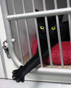 Black cat Animal Rescue GalawebDesign.jpg