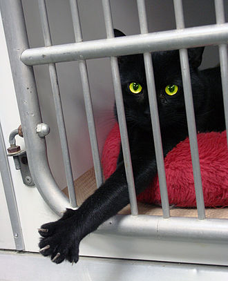 Animal shelter - A cat in an animal shelter waiting for owner