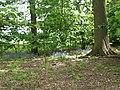 Bluebells (Hyacinthoides non-scripta) - geograph.org.uk - 1295142.jpg