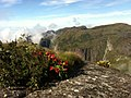Blumen - PNSO - panoramio.jpg