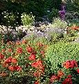 Blumen im Herzogenriedpark - panoramio (1).jpg