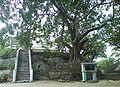 Bo Tree Ibbagala.JPG