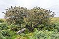 Bodmin Moor, Cornwall-9094.jpg