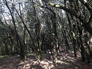 Bosque cerca de la Coma d'en Vila.jpg