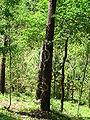 Bosque de Oma (34).JPG