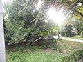Botanička bašta Jevremovac 008.JPG