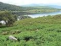Bracken by Loch Naver - geograph.org.uk - 491125.jpg