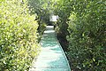 Bridged pathway in Coringa 4.jpg