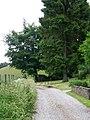 Bridleway, Ashmore Bottom - geograph.org.uk - 1347138.jpg
