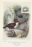 Britain's birds and their nests (1910) (14755394265).jpg