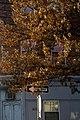 Brown Tree (166935183).jpeg