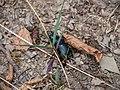 Bug, Oguz (P1090533).jpg