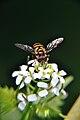 Bug with screw-on macro filter.jpg
