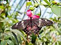 Butterfly Hanging from a flower.jpg