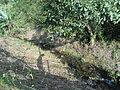 Córrego do Pau da Missa em Paranapiacaba.JPG