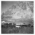 CH-NB - Persien, Elburs-Gebirge (Elburz)- Pferde - Annemarie Schwarzenbach - SLA-Schwarzenbach-A-5-06-187.jpg