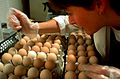 CSIRO ScienceImage 352 Inoculating Eggs for Influenza Production.jpg