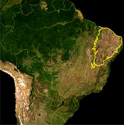 Map of the Caatinga scrub as delineated by the IBAMA. Yellow line approximately encloses the Caatinga scrub distribution.Satellite image from NASA.