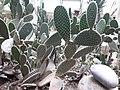Cactus20170706 152214.jpg