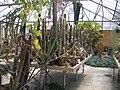 Cactuses in the Desert Garden Conservatory - San Marino - California.jpg