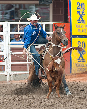 Calf roping - Calf Roping event at the Calgary Stampede